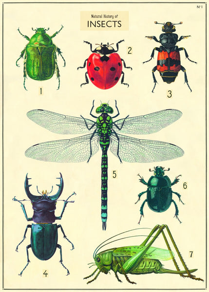 Vintage Poster Insects 2 (large)