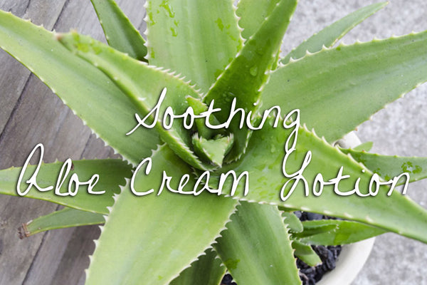 Soothing Aloe Cream Lotion