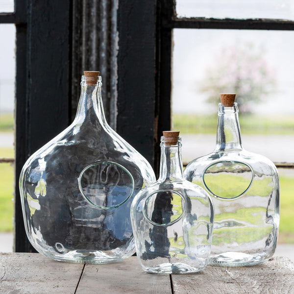 Glass Bottle Terrarium, Medium