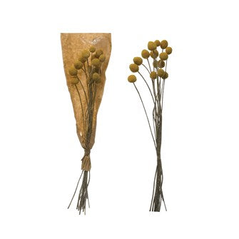 Dried Natural Craspedia Bunch, Yellow