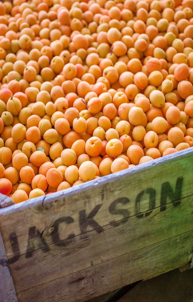 Clutha Sun Apricots Jackson Orchards - New Zealand Orchard