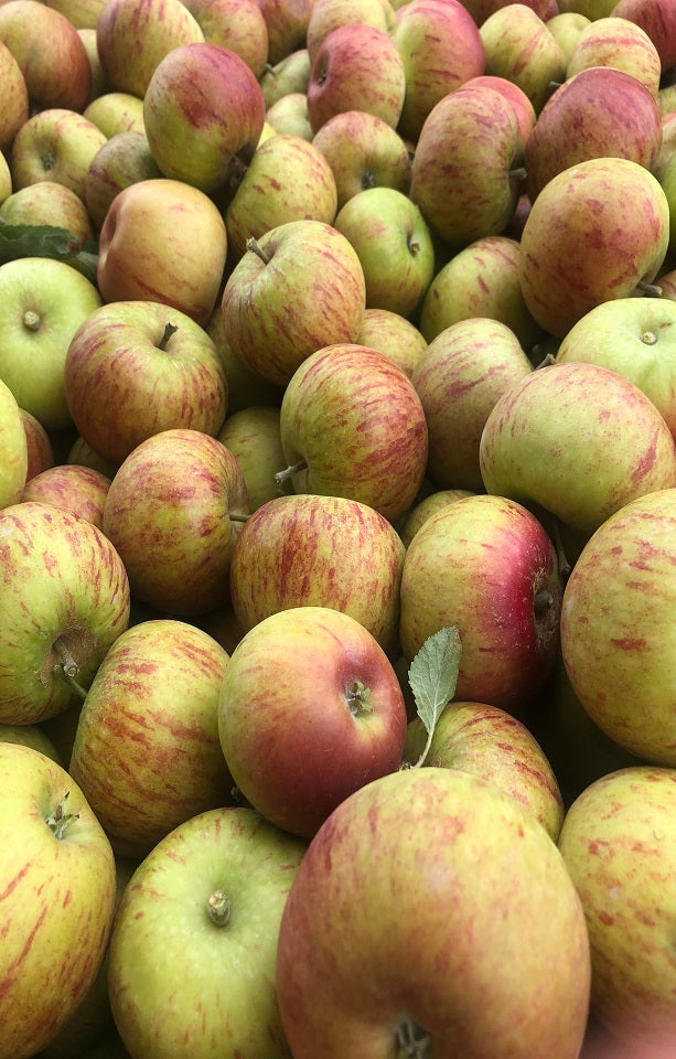 Seasonal Apples - Jackson Orchards
