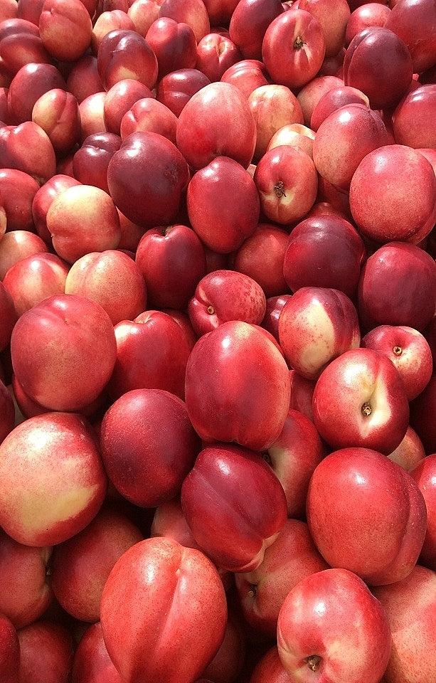 Fire Pearl Nectarines