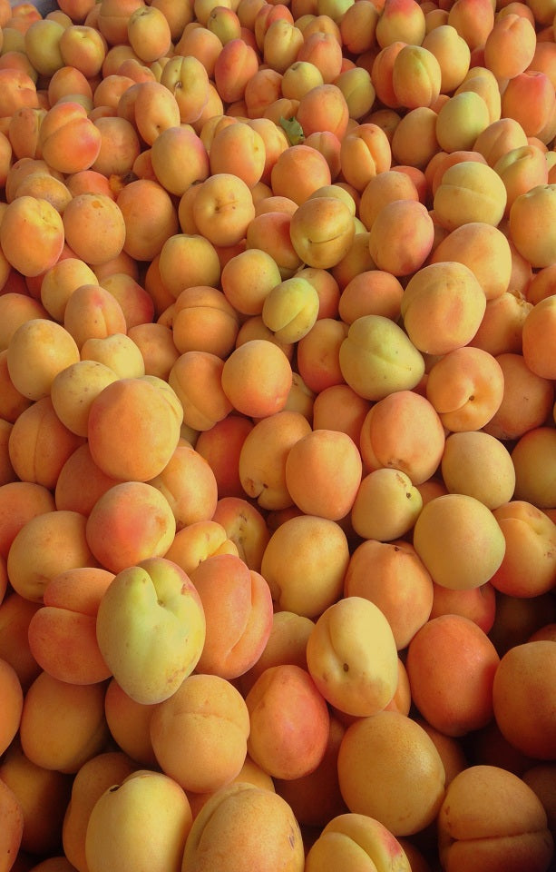 Moorpark Apricots Jackson Orchards - New Zealand Orchard