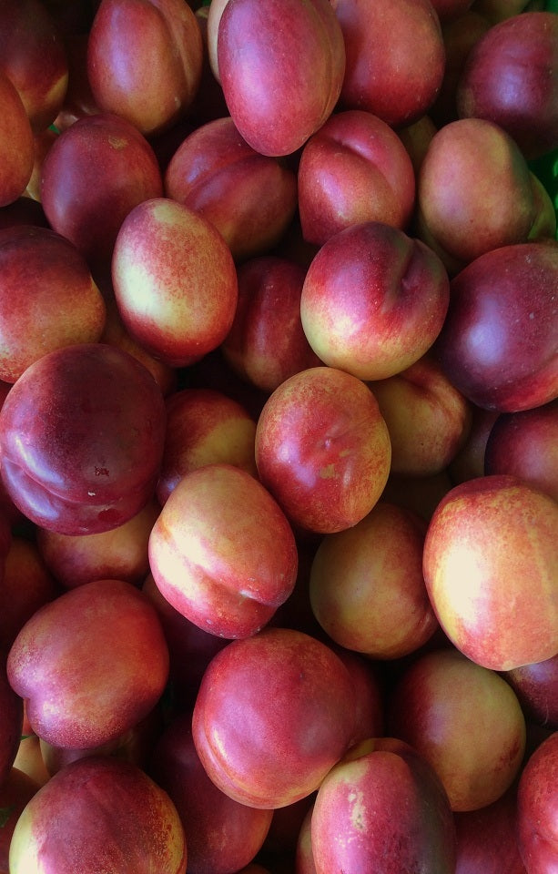 Orion Nectarines - Jackson Orchards