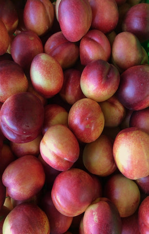 Orion Nectarines
