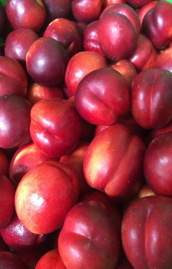 Ruby Diamond Nectarines Jackson Orchards - New Zealand Orchard
