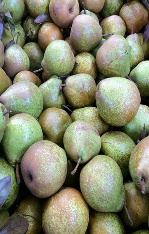 Winter Nelis Pears Jackson Orchards - New Zealand Orchard