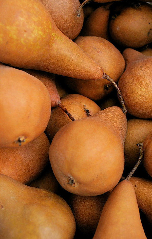 Beurre Bosc Pears Jackson Orchards - New Zealand Orchard