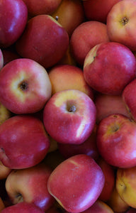 Pacific Rose Apples Jackson Orchards - New Zealand Orchard