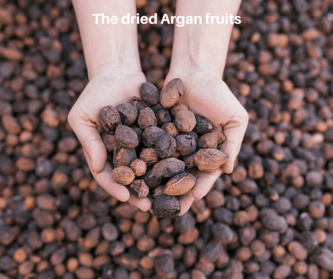 The dried Argan fruits - Akhal Beauty