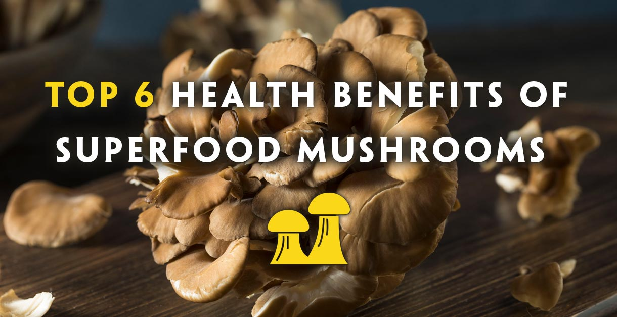 Top 6 Health Benefits of Medicinal Mushrooms