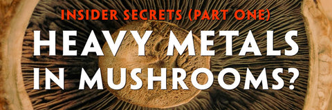 Teelixir Insider Secrets (Part One) Heavy Metals in your Superfood Medicinal Mushrooms– Reishi, Chaga, Lion's Mane, Cordyceps, Maitake, Turkey Tail