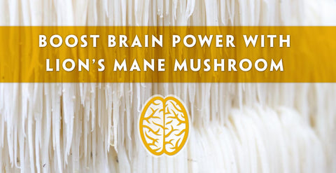 How to Boost Brain Power with Lion's Mane Superfood Medicinal Mushroom Extract Powder