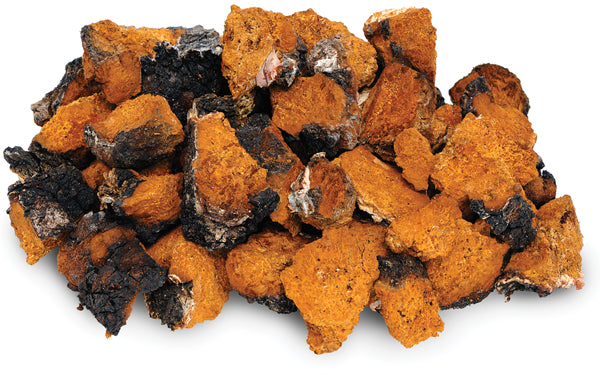 What you need to know about Chaga mushroom - Teelixir