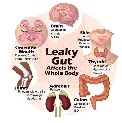 Leaky gut affects the whole body superfood mushrooms heal gut health