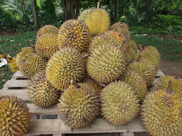 Large pile of thorny durian fruit