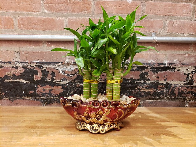 Get Some Luck Delivered to Your Door: Live Bamboo Arrangements Available for Delivery
