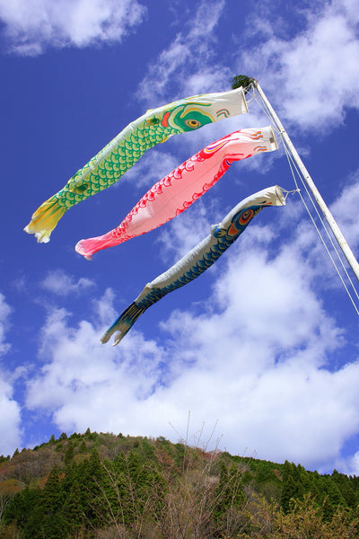 Colorful Japanese carp banners blowing in the wind