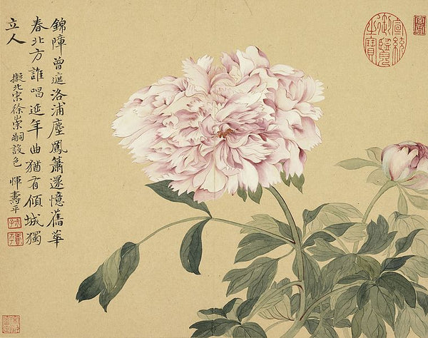 Chinese painting of pink peony