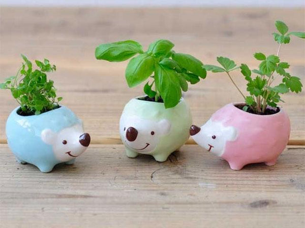 Three cute hedgehog plants in blue, green, and pink