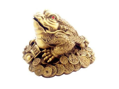 A gold colored money toad with red eyes, side view