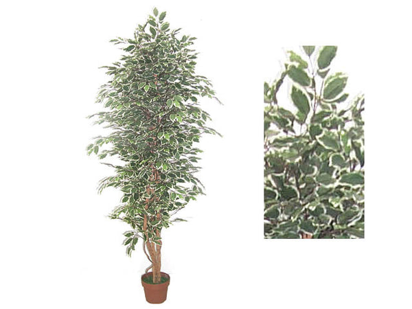 Artificial Plant - Ficus Tree