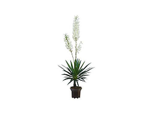 Artificial Plant - Yucca Flower