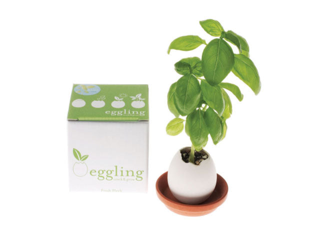 Egg Hatches Plant