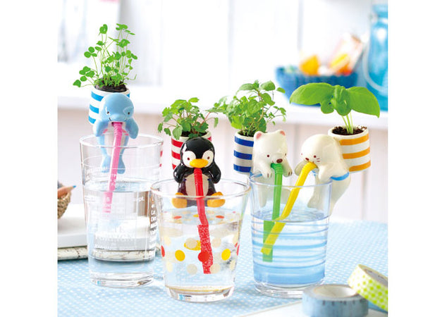 Sea Friends Chuppon Plant - Growing Garden