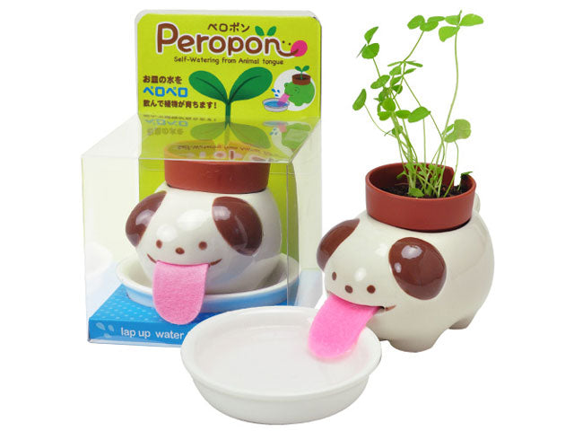 Peropon Plant - Growing Garden