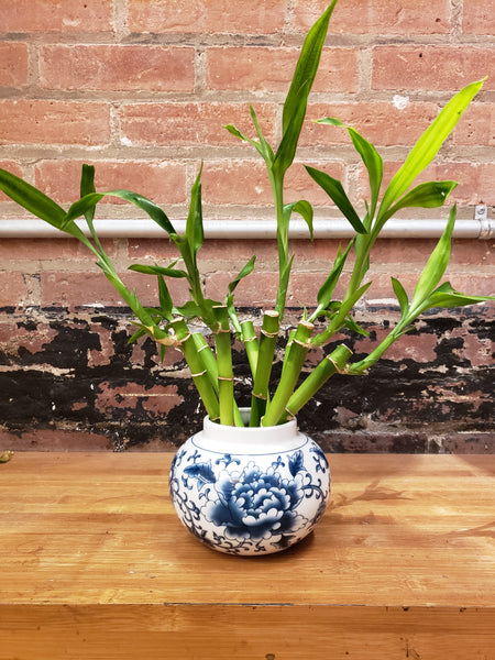 Medium Blue and White Peony Jar with 8 Bamboo Stalks