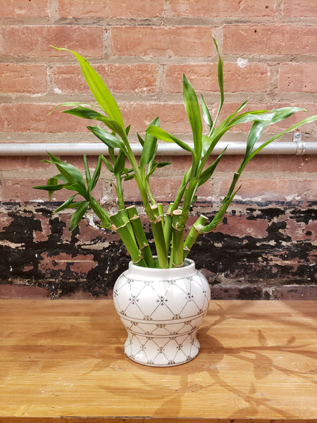 White and Silver Ginger Jar with 8 Bamboo Stalks