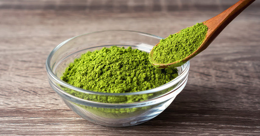Meet Sencha powder - Why it's even better for you than Matcha