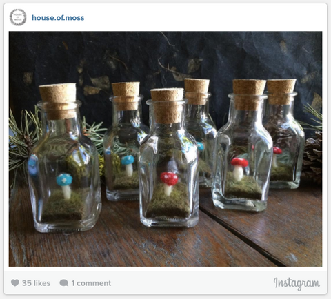 House of Moss Instagram Photo - Mushroom Terrariums