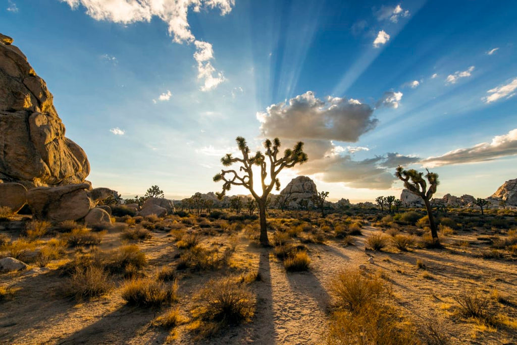 Insider's Guide to Joshua Tree National Park