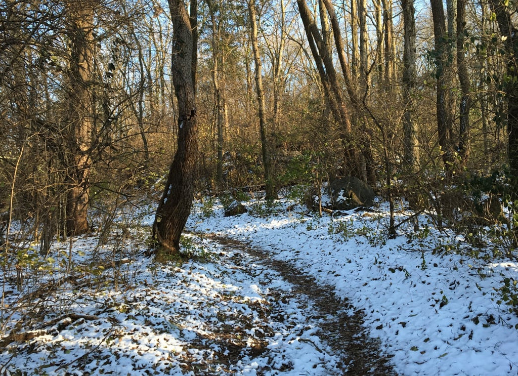 7 Tips for Trail Running in the Winter