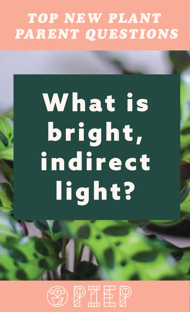 What is bright, indirect light? This blog posts goes over all basics about this confusing phrase to new plant parents can understand their houseplant's needs!