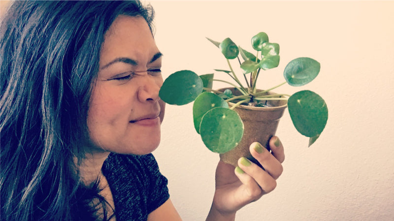 Real People Love Plants: An Interview with MaryRose Go