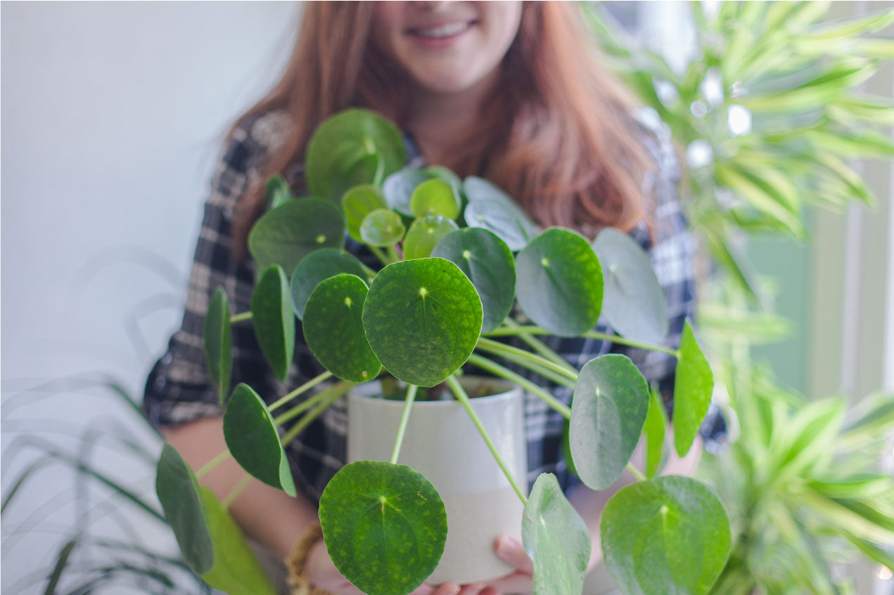 Top 5 Pilea Care Tips