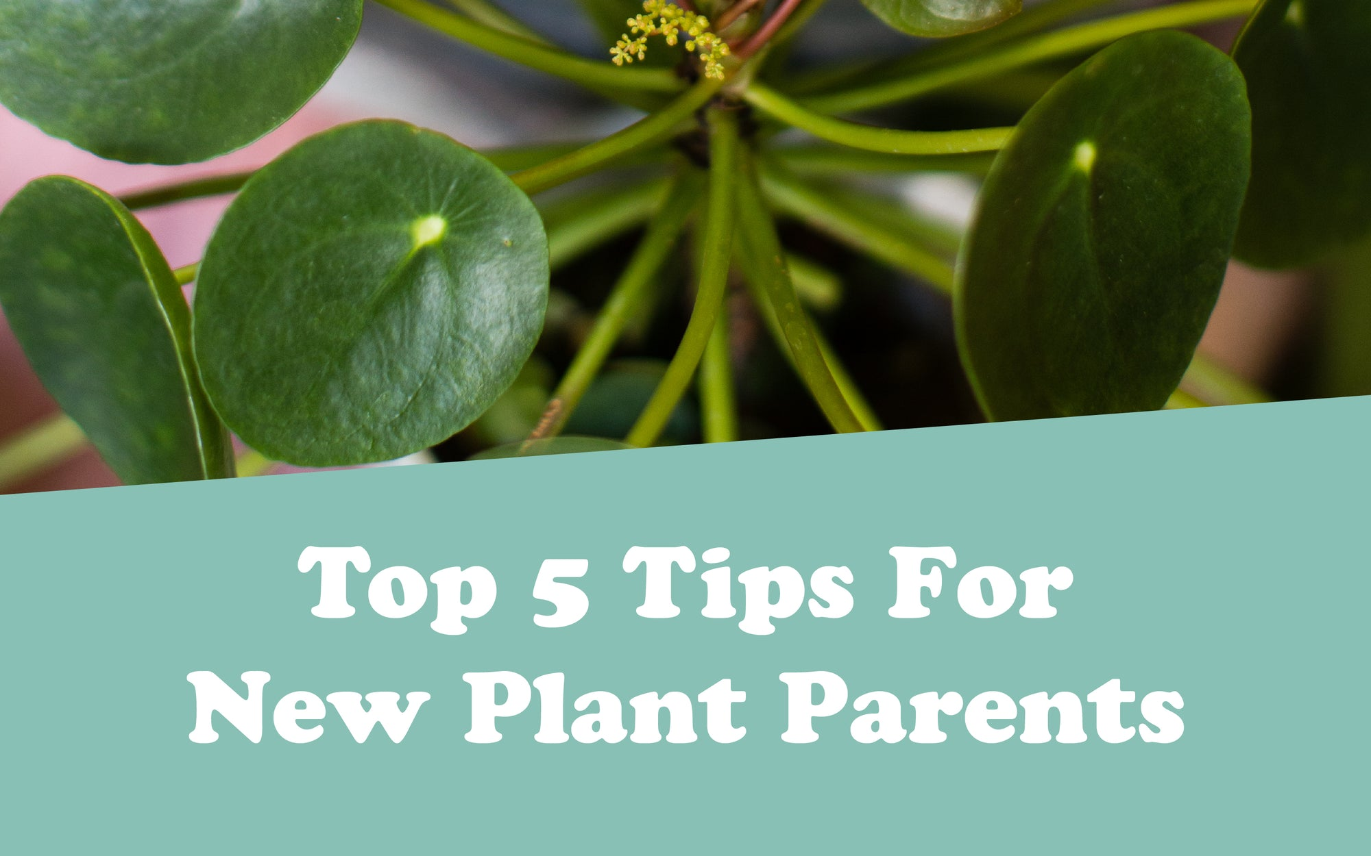 Top 5 Tips For New Plant Parents
