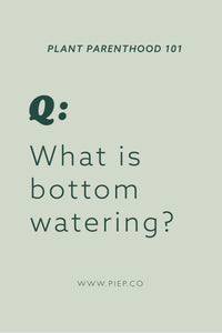 Customer Q's: What is bottom watering?