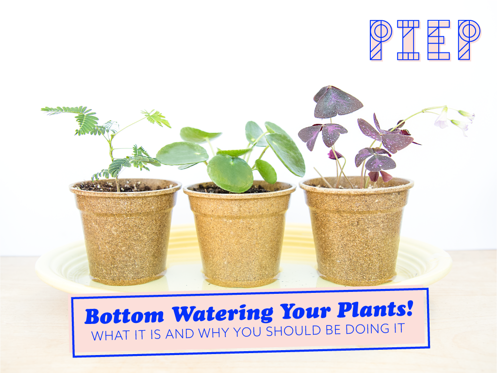 Bottom Watering