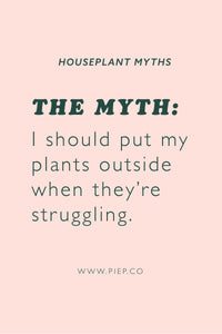 Houseplant Myths: I should put my plants outside when they struggle.