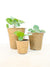 Pilea Propagation and Sharing