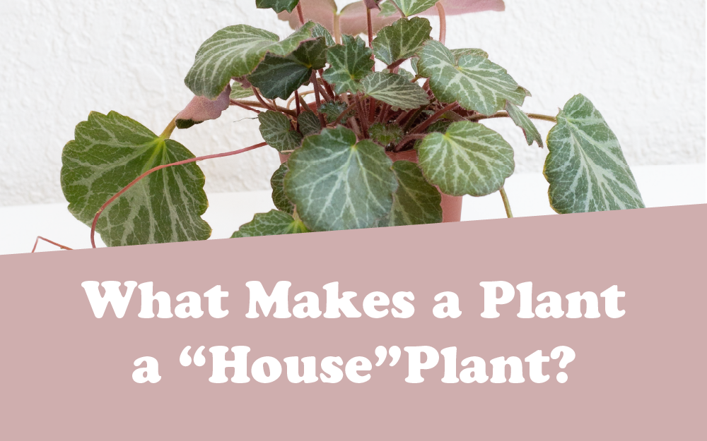 "What Makes A Plant A ""House"" Plant?"