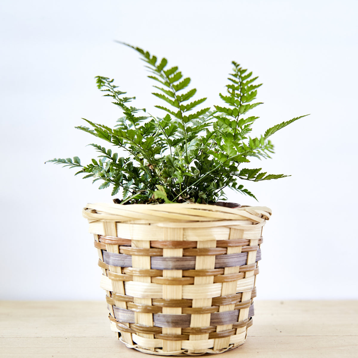 Simona Basket Planter - Small
