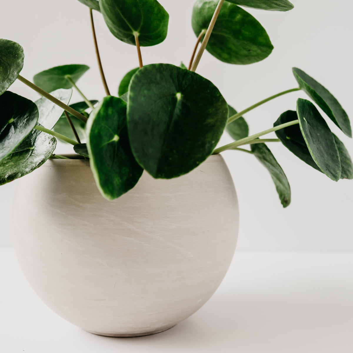 Astrid Planter Small