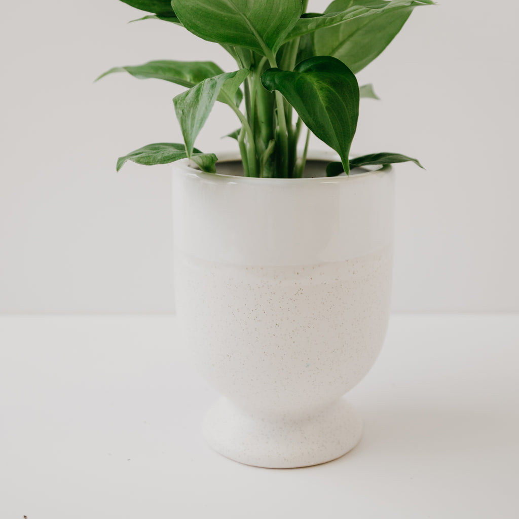 Laney Vase Pot