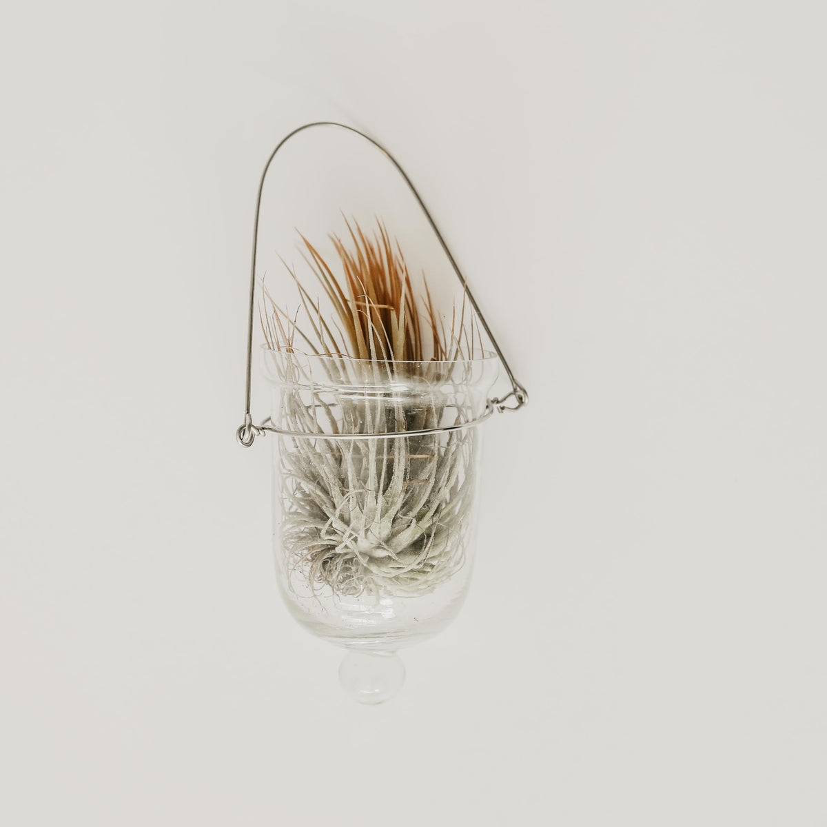 Votive Glass Air Plant Hanger